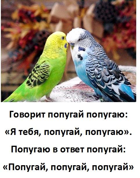 картинки говорит попугай попугаю красный мерседес подъезжает
