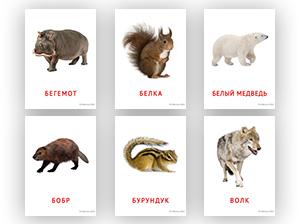 Карточки животных